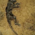 Natura Docet Wonderryck Twente - Apenstreken in de oertijd - fossiel IDA