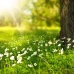 spring-tree-flowers-meadow-60006-479x263-c-default