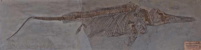 De Ichthyosaurus