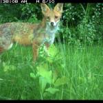 natura-docet-wonderryck-twente-jordi-timmermans-wilde-dieren-in-je-achtertuin