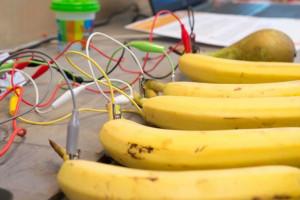 bananen wetenschap